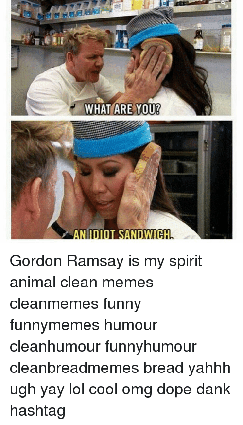 Idiot Sandwich: at  WHAT ARE YOU!  AN IDIOT SANDWICH Gordon Ramsay is my spirit animal clean memes cleanmemes funny funnymemes humour cleanhumour funnyhumour cleanbreadmemes bread yahhh ugh yay lol cool omg dope dank hashtag