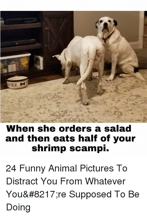 Ater: ATER  When she orders a salad  and then eats half of your  shrimp scampi. 24 Funny Animal Pictures To Distract You From Whatever You're Supposed To Be Doing