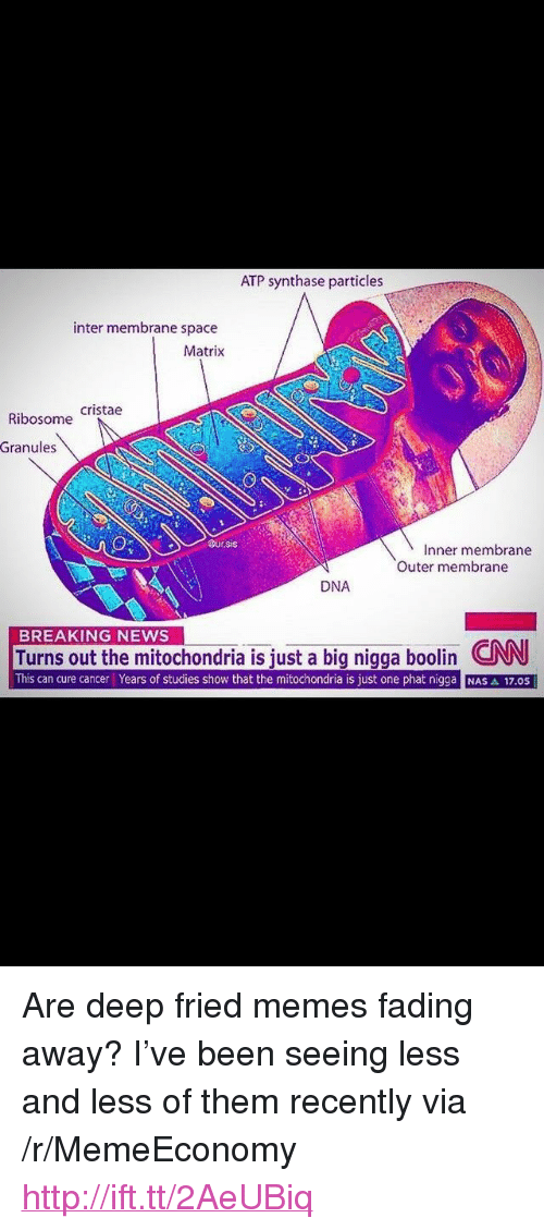 """Fading Away: ATP synthase particles  inter membrane space  Matrix  Ribosome Cristae  Granules  Dur.sis  Inner membrane  Outer membrane  DNA  BREAKING NEWS  Turns out the mitochondria is iust a big nigga boolin CNN  This can cure cancer Years of studies show that the mitochondria is just one phat nigga NAS A 17.0S <p>Are deep fried memes fading away? I've been seeing less and less of them recently via /r/MemeEconomy <a href=""""http://ift.tt/2AeUBiq"""">http://ift.tt/2AeUBiq</a></p>"""