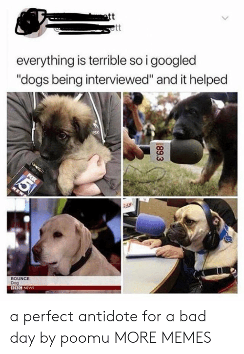 "Antidote, Bad, and Bad Day: att  everything is terrible so i googled  ""dogs being interviewed"" and it helped  BOUNCE  Dog  89.3 a perfect antidote for a bad day by poomu MORE MEMES"