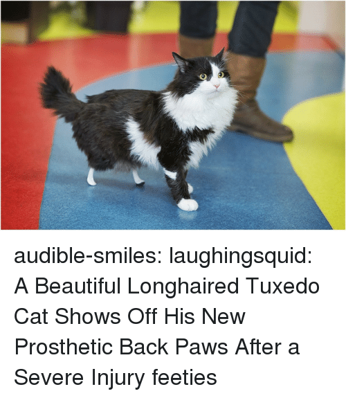 Audible: audible-smiles:  laughingsquid: A Beautiful Longhaired Tuxedo Cat Shows Off His New Prosthetic Back Paws After a Severe Injury feeties