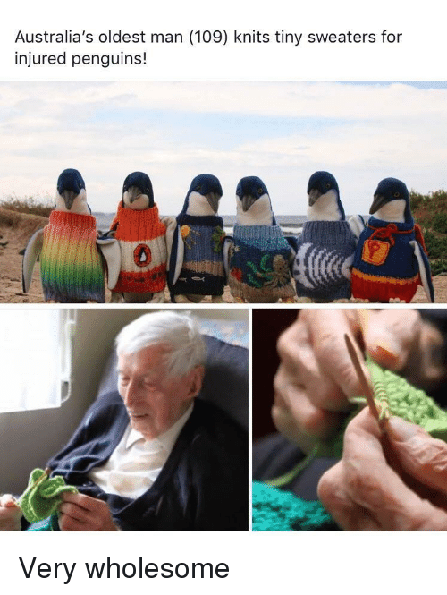 sweaters: Australia's oldest man (109) knits tiny sweaters for  injured penguins!  0 Very wholesome
