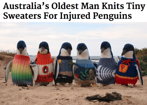 Penguins, Tiny, and Man: Australia's Oldest Man Knits Tiny  Sweaters For Injured Penguins