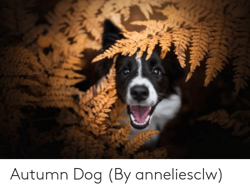 Dog and Autumn: Autumn Dog (By anneliesclw)