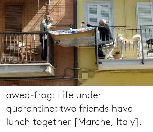 Awed: awed-frog:  Life under quarantine: two friends have lunch together [Marche, Italy].