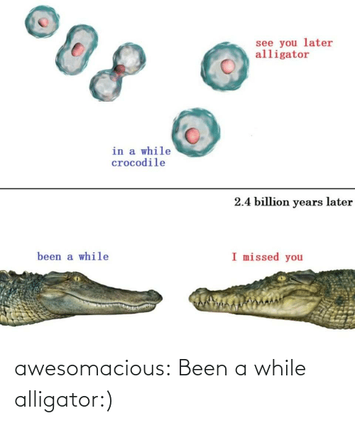 Alligator: awesomacious:  Been a while alligator:)