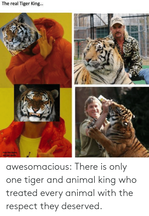 Respect, Tumblr, and Animal: awesomacious:  There is only one tiger and animal king who treated every animal with the respect they deserved.