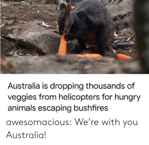 were: awesomacious:  We're with you Australia!