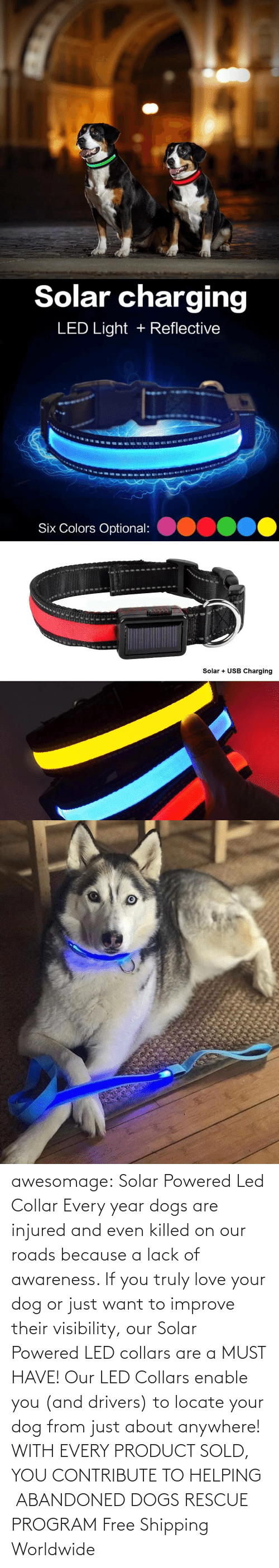 program: awesomage: Solar Powered Led Collar   Every year dogs are injured and even killed on our roads because a lack of awareness. If you truly love your dog or just want to improve their visibility, our Solar Powered LED collars are a MUST HAVE!   Our LED Collars enable you (and drivers) to locate your dog from just about anywhere!     WITH EVERY PRODUCT SOLD, YOU CONTRIBUTE TO HELPING  ABANDONED DOGS RESCUE PROGRAM     Free Shipping Worldwide