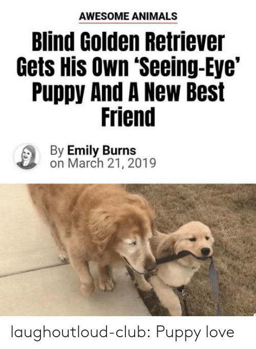 Animals, Best Friend, and Club: AWESOME ANIMALS  Blind Golden Retriever  Gets His Own 'Seeing-Eye'  Puppy And A New Best  Friend  By Emily Burns  on March 21, 2019 laughoutloud-club:  Puppy love