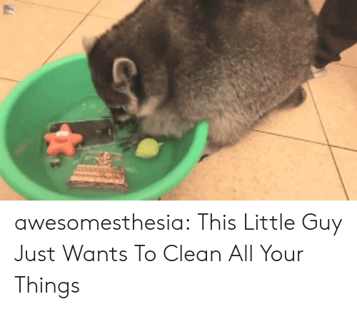 Tumblr, Blog, and Com: awesomesthesia:  This Little Guy Just Wants To Clean All Your Things