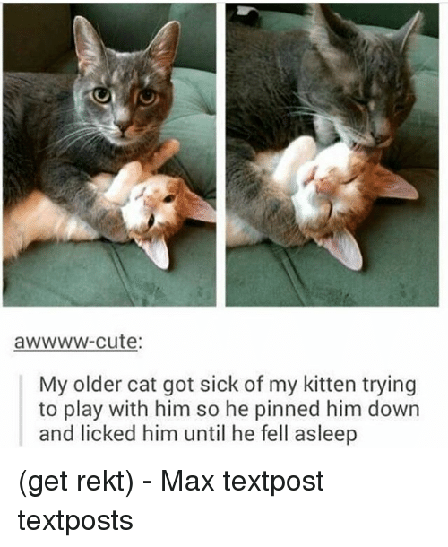 Cute, Memes, and Sick: awwww-cute  My older cat got sick of my kitten trying  to play with him so he pinned him down  and licked him until he fell asleep (get rekt) - Max textpost textposts