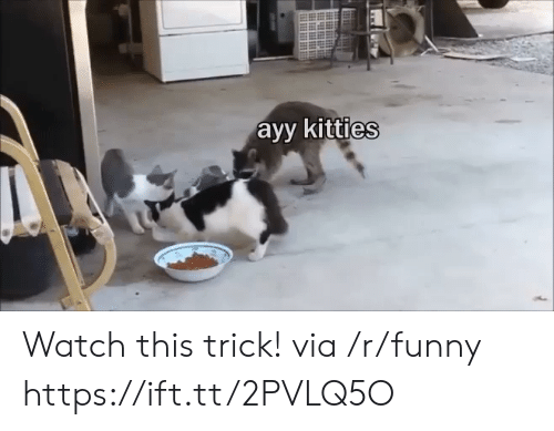 Funny, Kitties, and Watch: ayy kitties Watch this trick! via /r/funny https://ift.tt/2PVLQ5O