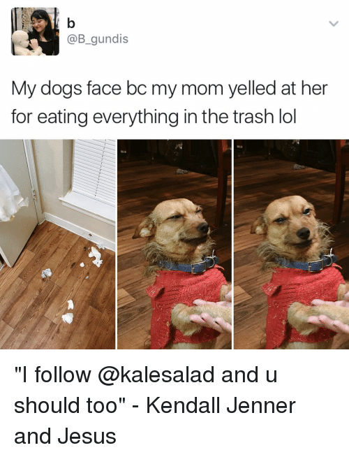 "Kendall Jenner, Memes, and Trash: @B gundis  My dogs face bc my mom yelled at her  for eating everything in the trash lol ""I follow @kalesalad and u should too"" - Kendall Jenner and Jesus"