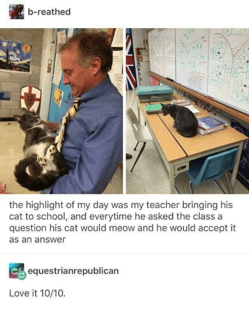 Love, School, and Teacher: b-reathed  the highlight of my day was my teacher bringing his  cat to school, and everytime he asked the class a  question his cat would meow and he would accept it  as an answer  equestrianrepublican  Love it 10/10.