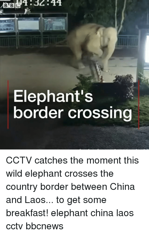 Memes, China, and Breakfast: B32:44  Elephant's  border crossing CCTV catches the moment this wild elephant crosses the country border between China and Laos... to get some breakfast! elephant china laos cctv bbcnews