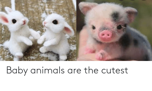 Baby Animals: Baby animals are the cutest