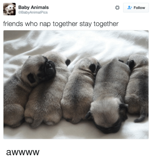 Baby Animals: Baby Animals  @BabyAnimalPics  Follow  friends who nap together stay together awwww