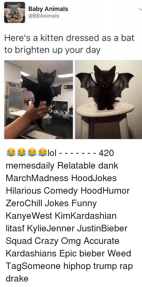 Baby Animal: Baby Animals  @BBAnimals  Here's a kitten dressed as a bat  to brighten up your day 😂😂😂😂lol - - - - - - - 420 memesdaily Relatable dank MarchMadness HoodJokes Hilarious Comedy HoodHumor ZeroChill Jokes Funny KanyeWest KimKardashian litasf KylieJenner JustinBieber Squad Crazy Omg Accurate Kardashians Epic bieber Weed TagSomeone hiphop trump rap drake