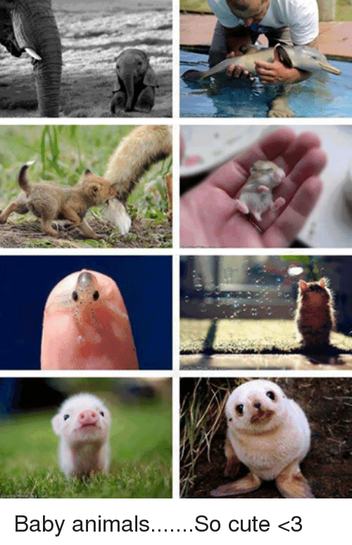 Baby Animal: Baby animals.......So cute <3
