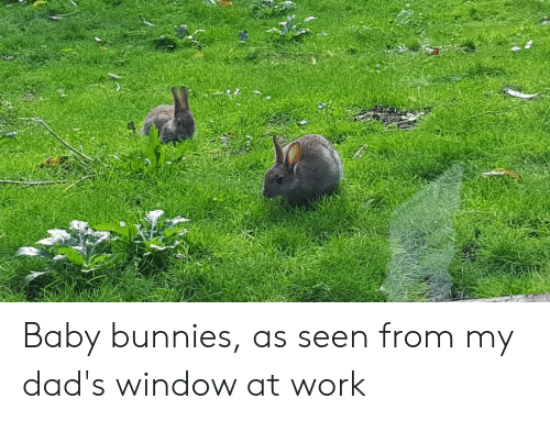 Bunnies, Work, and Baby: Baby bunnies, as seen from my dad's window at work