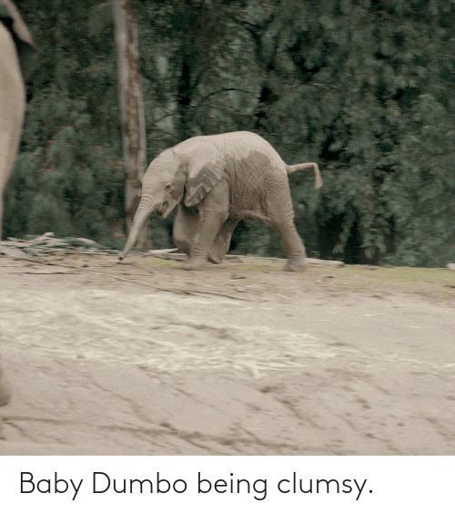 Dumbo: Baby Dumbo being clumsy.