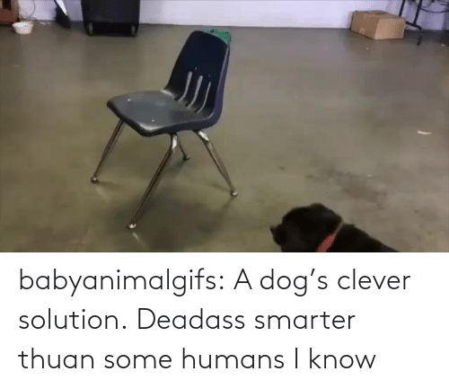 humans: babyanimalgifs: A dog's clever solution.   Deadass smarter thuan some humans I know