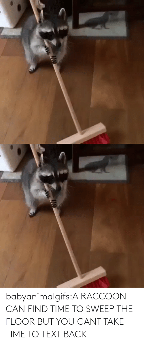 Cant: babyanimalgifs:A RACCOON CAN FIND TIME TO SWEEP THE FLOOR BUT YOU CANT TAKE TIME TO TEXT BACK