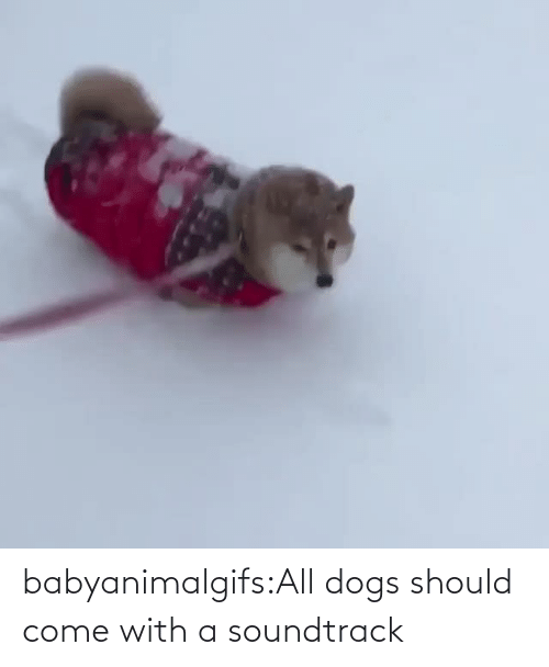 come: babyanimalgifs:All dogs should come with a soundtrack