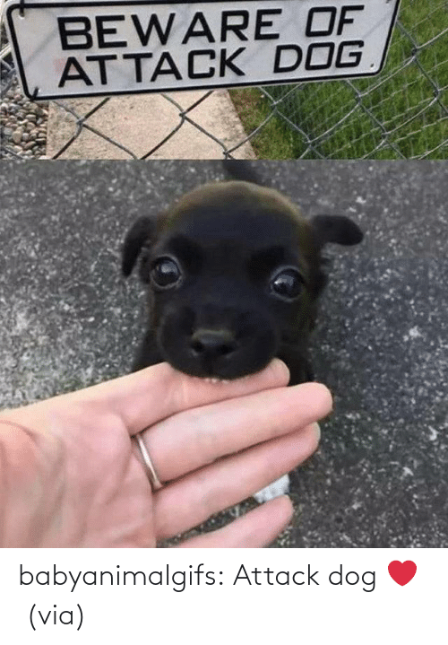 attack: babyanimalgifs:  Attack dog ❤️ (via)