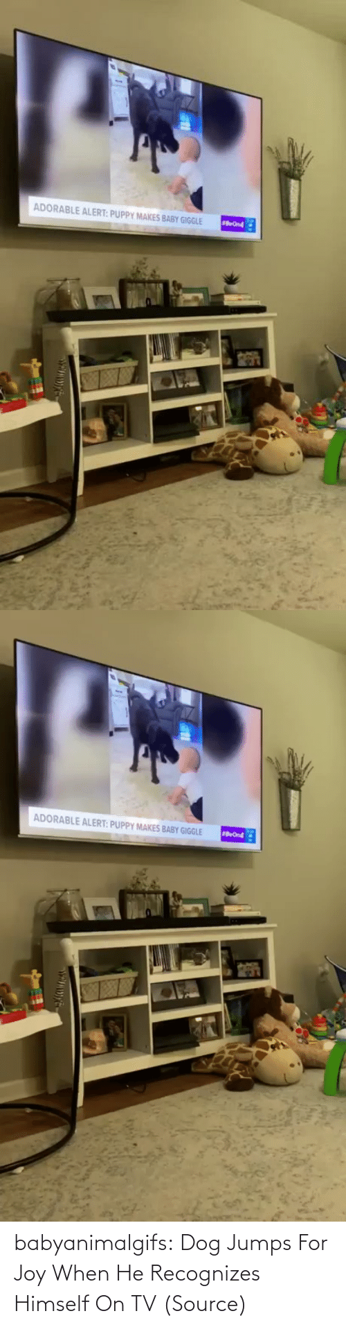 /tv/ : babyanimalgifs:  Dog Jumps For Joy When He Recognizes Himself On TV (Source)