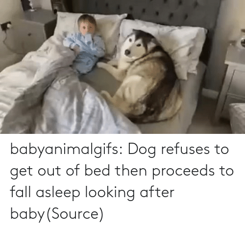 out: babyanimalgifs:  Dog refuses to get out of bed then proceeds to fall asleep looking after baby(Source)