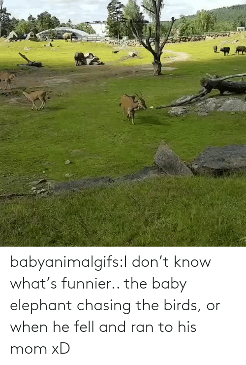 His: babyanimalgifs:I don't know what's funnier.. the baby elephant chasing the birds, or when he fell and ran to his mom xD