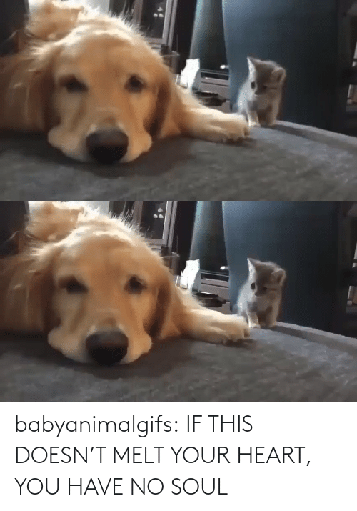 Doesnt: babyanimalgifs:  IF THIS DOESN'T MELT YOUR HEART, YOU HAVE NO SOUL