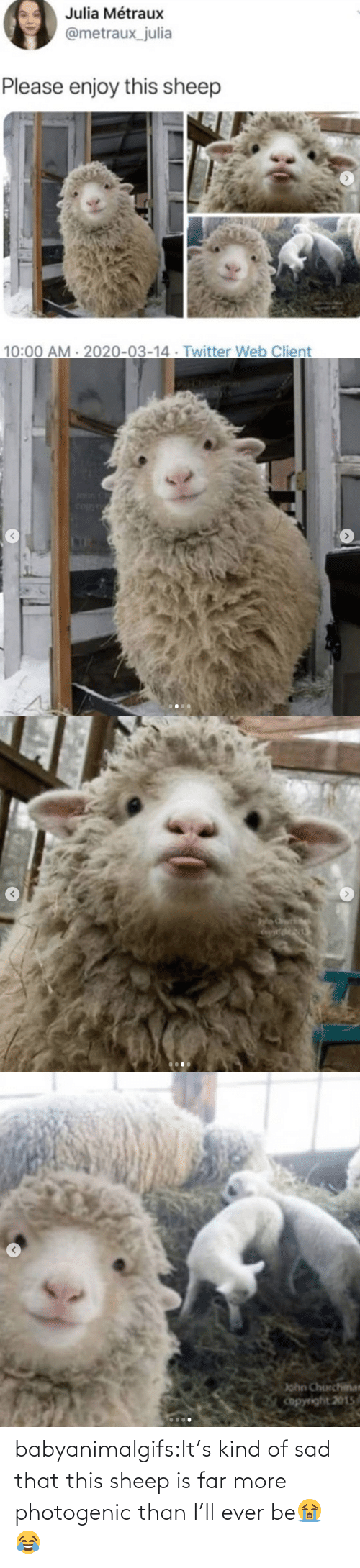 ever: babyanimalgifs:It's kind of sad that this sheep is far more photogenic than I'll ever be😭😂
