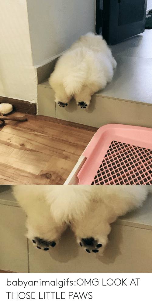 look: babyanimalgifs:OMG LOOK AT THOSE LITTLE PAWS