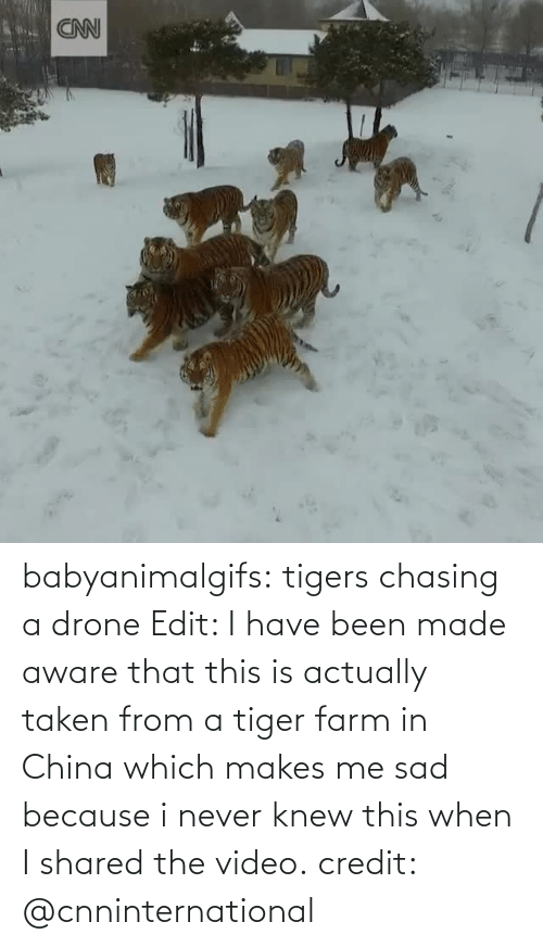 Never: babyanimalgifs: tigers chasing a drone Edit: I have been made aware that this is actually taken from a tiger farm in China which makes me sad because i never knew this when I shared the video. credit: @cnninternational