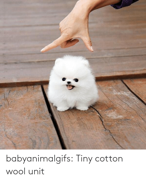 tiny: babyanimalgifs:  Tiny cotton wool unit