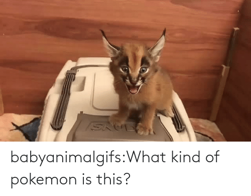 Pokemon: babyanimalgifs:What kind of pokemon is this?