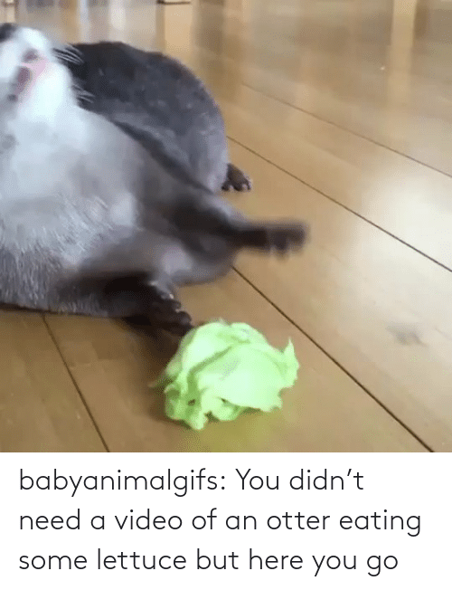 eating: babyanimalgifs:  You didn't need a video of an otter eating some lettuce but here you go