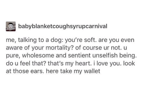 Dogs, Love, and I Love You: babyblanketcoughsyrupcarnival  me, talking to a dog: you're soft. are you even  aware of your mortality? of course ur not. u  pure, wholesome and sentient unselfish being  do u feel that? that's my heart. i love you. look  at those ears. here take my wallet
