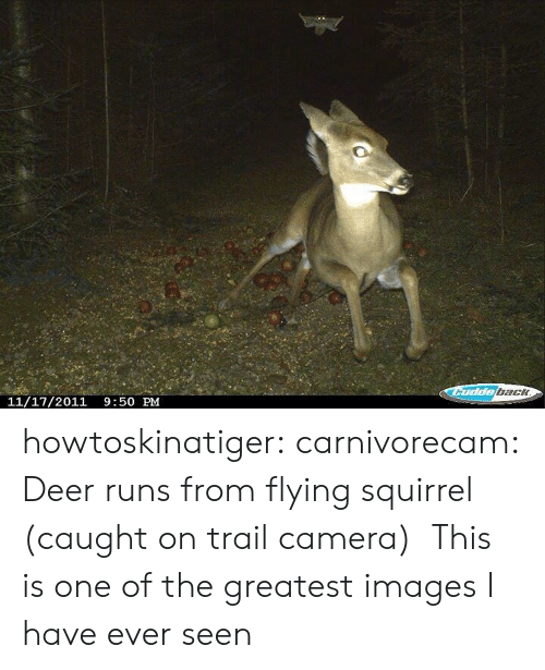 bach: bach  11/17/2011 9:50 PM howtoskinatiger:  carnivorecam:  Deer runs from flying squirrel (caught on trail camera)  This is one of the greatest images I have ever seen