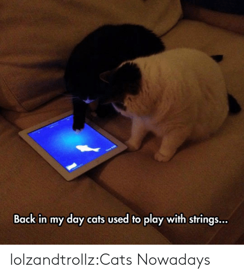 Cats, Tumblr, and Blog: Back in my day cats used to play with strings... lolzandtrollz:Cats Nowadays