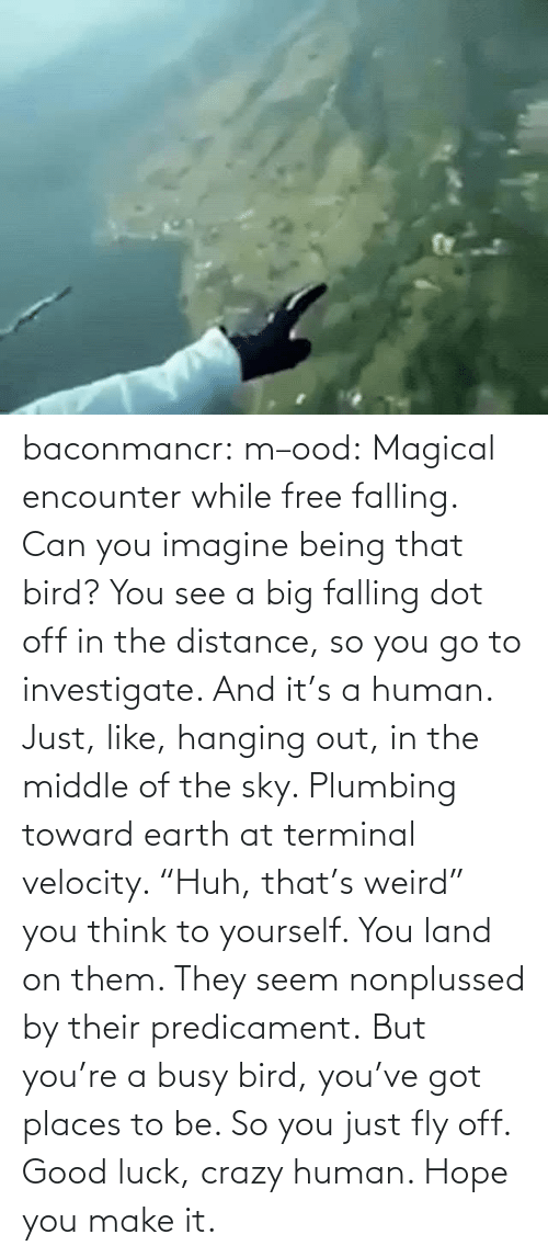 "out: baconmancr:  m–ood: Magical encounter while free falling.  Can you imagine being that bird? You see a big falling dot off in the distance, so you go to investigate. And it's a human. Just, like, hanging out, in the middle of the sky. Plumbing toward earth at terminal velocity.  ""Huh, that's weird"" you think to yourself.  You land on them. They seem nonplussed by their predicament. But you're a busy bird, you've got places to be. So you just fly off. Good luck, crazy human. Hope you make it."
