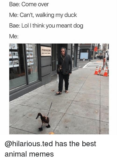 Bae, Come Over, and Lol: Bae: Come over  Me: Can't, walking my duck  Bae: Lol l think you meant dog  Me:  PARAGON @hilarious.ted has the best animal memes
