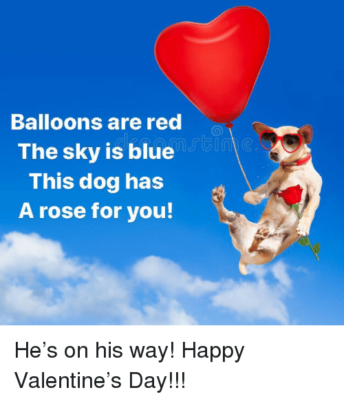 Blue, Happy, and Rose: Balloons are red  The sky is blue  This dog has  A rose for you <p>He's on his way! Happy Valentine's Day!!!</p>
