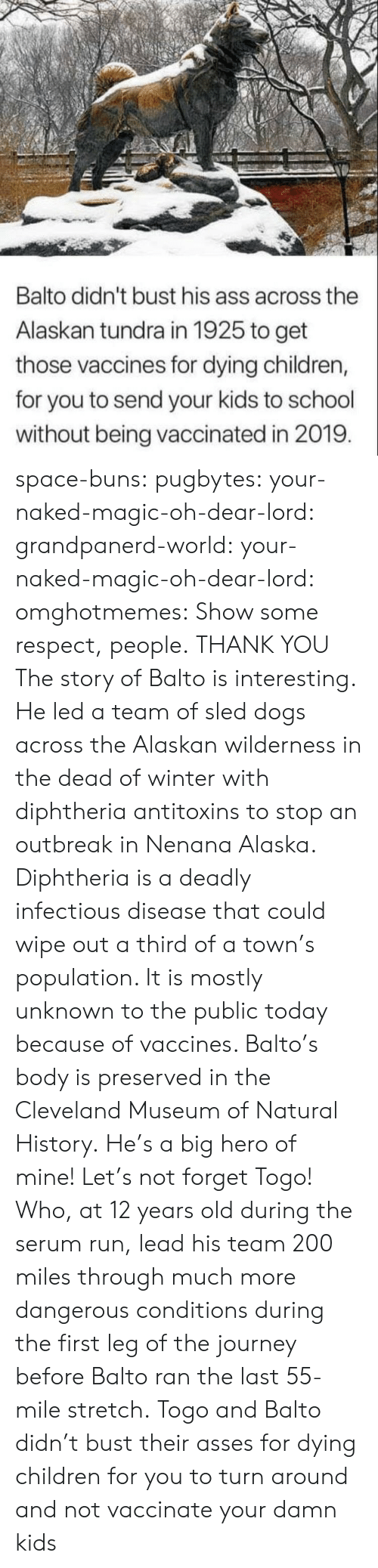Alaska: Balto didn't bust his ass across the  Alaskan tundra in 1925 to get  those vaccines for dying children,  for you to send your kids to school  without being vaccinated in 2019 space-buns:  pugbytes:   your-naked-magic-oh-dear-lord:  grandpanerd-world:   your-naked-magic-oh-dear-lord:  omghotmemes: Show some respect, people.  THANK YOU   The story of Balto is interesting. He led a team of sled dogs across the Alaskan wilderness in the dead of winter with diphtheria antitoxins to stop an outbreak in Nenana Alaska. Diphtheria is a deadly infectious disease that could wipe out a third of a town's population. It is mostly unknown to the public today because of vaccines. Balto's body is preserved in the Cleveland Museum of Natural History.   He's a big hero of mine!   Let's not forget Togo! Who, at 12 years old during the serum run, lead his team 200 miles through much more dangerous conditions during the first leg of the journey before Balto ran the last 55-mile stretch.   Togo and Balto didn't bust their asses for dying children for you to turn around and not vaccinate your damn kids