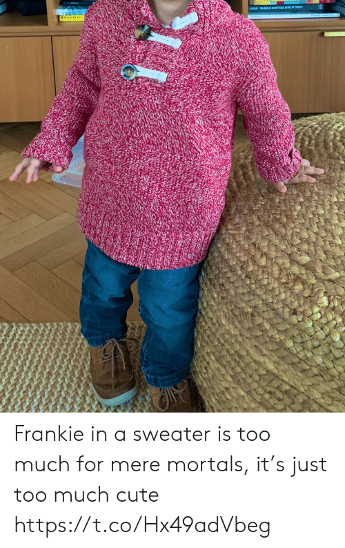 sweater: BARESTTO ARE AR ACCEPTABLE LEVEL OF TIEA Frankie in a sweater is too much for mere mortals, it's just too much cute https://t.co/Hx49adVbeg