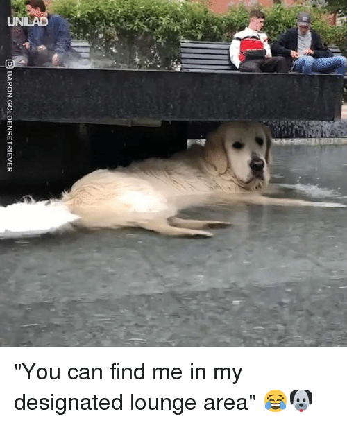 """Dank, 🤖, and Can: BARON.GOLDENRETRIEVER """"You can find me in my designated lounge area"""" 😂🐶"""