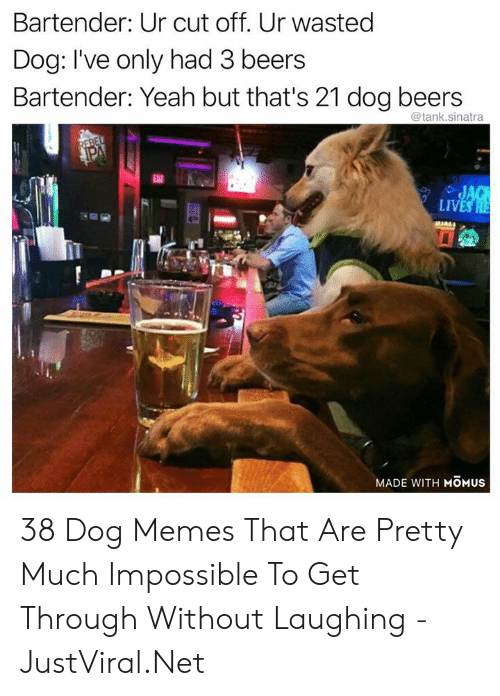 Yeah But: Bartender: Ur cut off. Ur wasted  Dog: I've only had 3 beers  Bartender: Yeah but that's 21 dog beers  @tank.sinatra  REBEL  PA  EAT  JAG  LIVES HE  MADE WITH MOMUS 38 Dog Memes That Are Pretty Much Impossible To Get Through Without Laughing - JustViral.Net